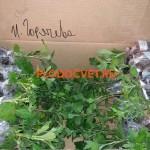 посылки хризантемы