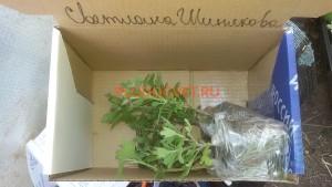 Посылка хризантемы