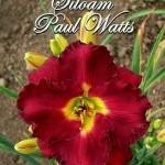Лилейник Siloam Paul Watts (Силоам Пол Ваттс).