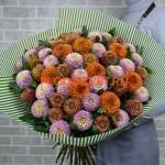 "Хризантема индийская одноголовая 'Zodiac Bronze' (Chrysanthemum Indicum Grp geplozen 'Zodiac Bronze ""."