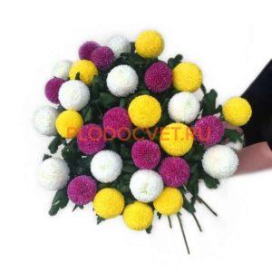 Хризантема крупноцветковая Пин-Понг