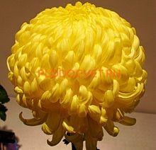 Хризантема крупноцветковая Кремист еллоу