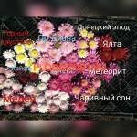 anemonovidnye-xrizantemy