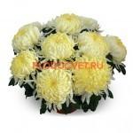Хризантема горшечнаяАжелас Джуни