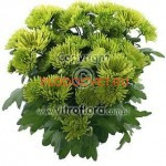 Хризантема горшечнаяГрин Волли