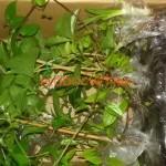 Посылка с растениями