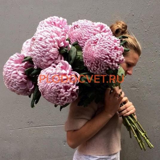 Хризантема крупноцветковая срезочная