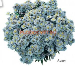 417 Azov