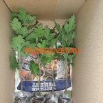 Хризантемы почтой