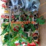 черенки хризантем отправка. почтой